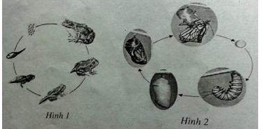 Bài tập trắc nghiệm Sinh học 11 | Câu hỏi trắc nghiệm Sinh học 11 có đáp án