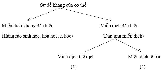 bài 3 SGK Sinh học 10 trang 131