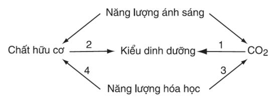 Lý thuyết Sinh học 10 Bài 33: Ôn tập phần sinh học vi sinh vật | Lý thuyết Sinh học 10 đầy đủ, chi tiết nhất