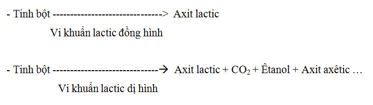 Lý thuyết Sinh học 10 Bài 23: Quá trình tổng hợp và phân giải các chất ở vi sinh vật   Lý thuyết Sinh học 10 đầy đủ, chi tiết nhất