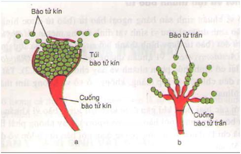 Lý thuyết Sinh học 10 Bài 26: Sinh sản của vi sinh vật   Lý thuyết Sinh học 10 đầy đủ, chi tiết nhất