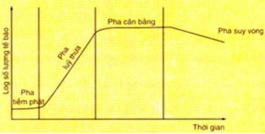 Lý thuyết Sinh học 10 Bài 25: Sinh trưởng của vi sinh vật | Lý thuyết Sinh học 10 đầy đủ, chi tiết nhất