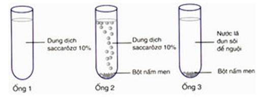 Lý thuyết Sinh học 10 Bài 24: Thực hành: Lên men êtilic và lactic | Lý thuyết Sinh học 10 đầy đủ, chi tiết nhất