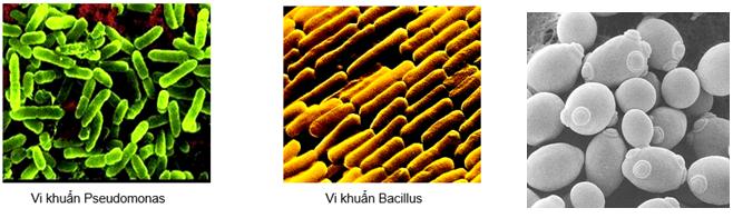Lý thuyết Sinh học 10 Bài 28: Thực hành: Quan sát một số vi sinh vật | Lý thuyết Sinh học 10 đầy đủ, chi tiết nhất