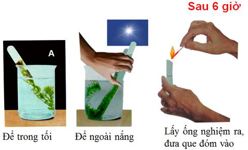 Lý thuyết Sinh học 6 Bài 21: Quang hợp hay, chi tiết | Sinh học lớp 6