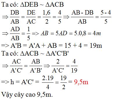 Giải bài 53 trang 87 SGK Toán 8 Tập 2 | Giải toán lớp 8